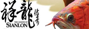 鄂州水族批发市场|鄂州水族馆|鄂州龙鱼